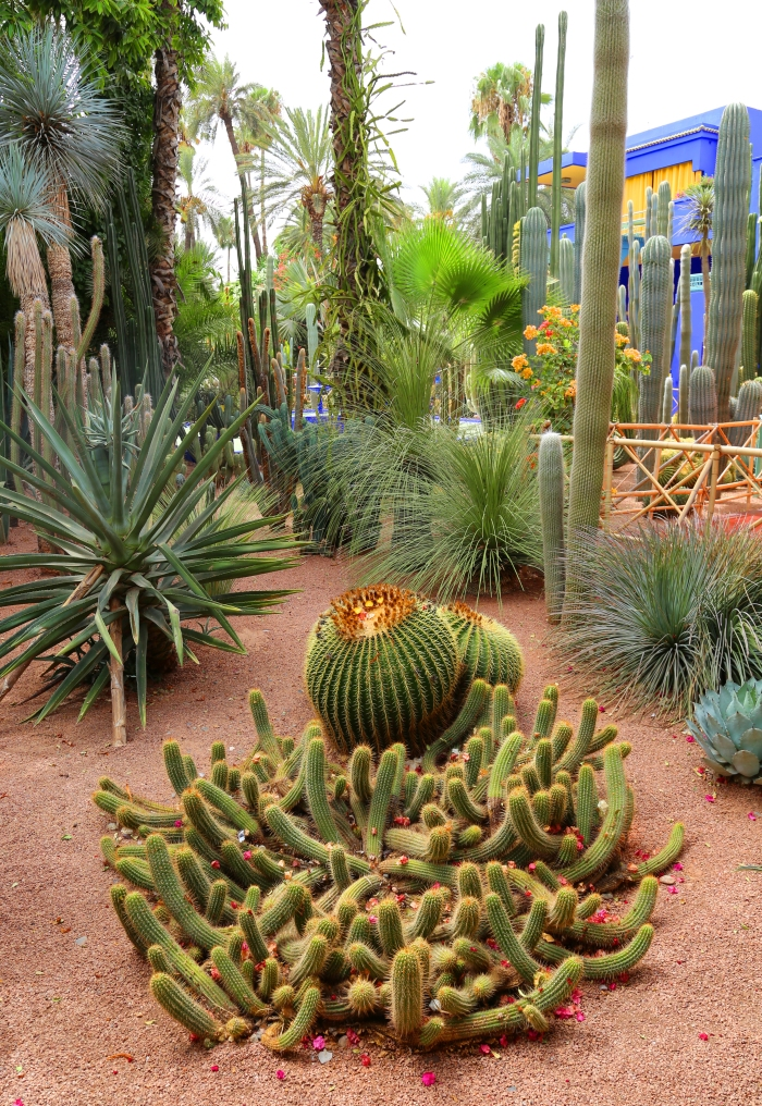 Cactii in the Jardin Majorelle.